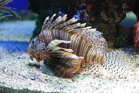 exotic fish: pesci esotici