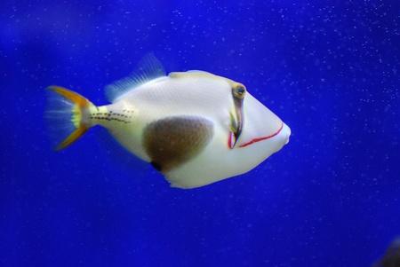 exotic fish: peces ex?ticos