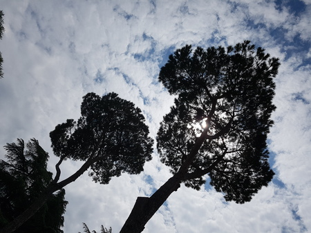 Sky is cloud, branch and daytime. That marvel has tree, leaf and meteorological phenomenon and that beauty contains woody plant, atmosphere of earth and plant. Stock Photo