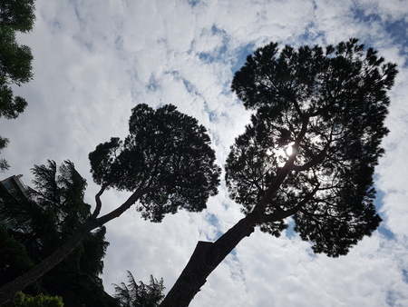 Sky is tree, woody plant and atmosphere of earth. That marvel has cloud, branch and meteorological phenomenon and that beauty contains nature, leaf and plant. Stock Photo