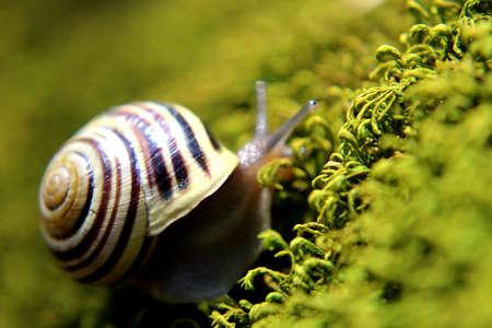 creep: Snail on moss Stock Photo