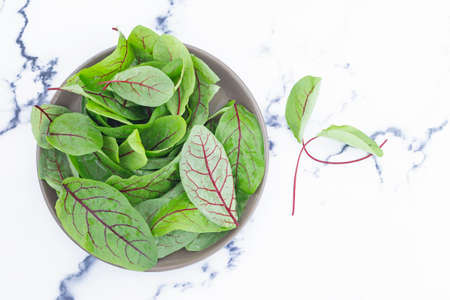 fresh green sorrel leaves on the table