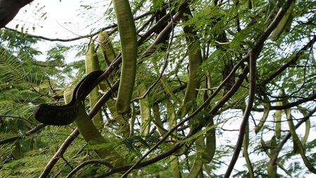 dominican republic: Fantastic plants in Dominican Republic, beautiful view