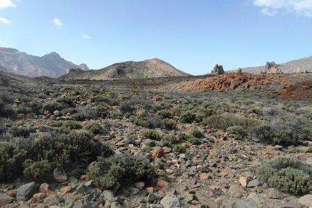 canarias: Canarian island Tenerife, beauty of Canarias, Spain