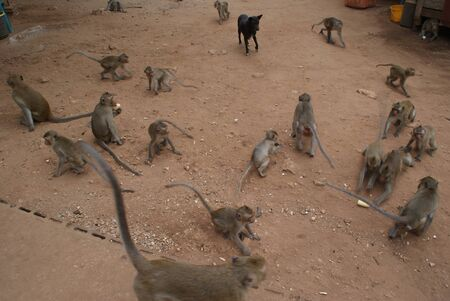 An amazing tour where you can see and even feed real monkeys. Be careful, these are wild animals!