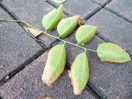fallen: The fallen leaves