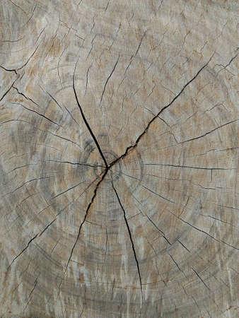 textured: Wood gnarl textured background