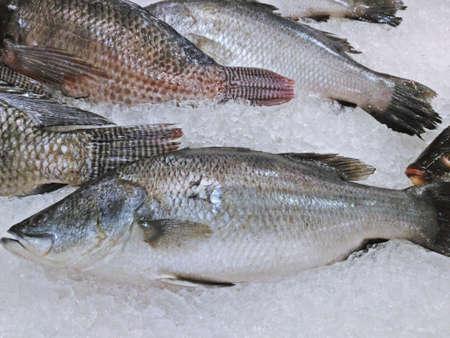 white perch: Fresh barramundi (silver perch or white perch) at the market Stock Photo