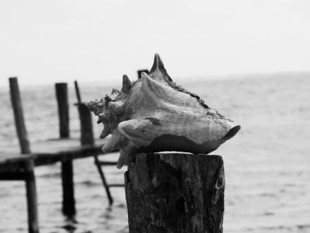 Muschel Zeit am Strand Sommerurlaub schwarz und weiß