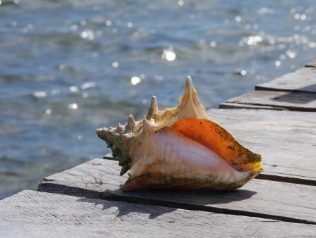 sea ??shell Zeit am Strand Sommerurlaub
