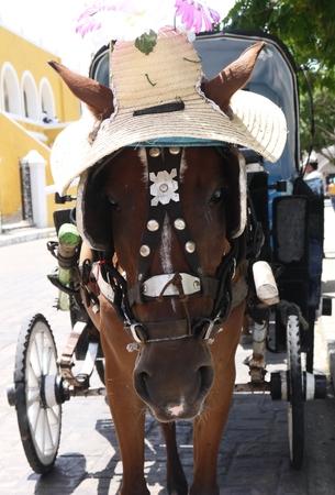 Izamal famous yello city in Mexico Yucatan funny horse Фото со стока