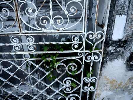 puerta de metal: puerta de la casa, puerta met�lica, vista especial