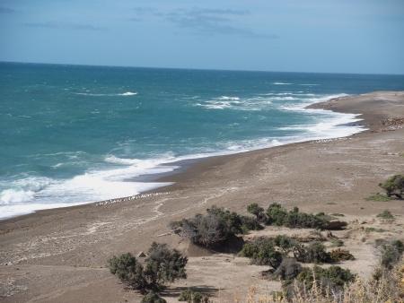 アルゼンチン パタゴニア プエルト ・ マドリン国立公園 写真素材