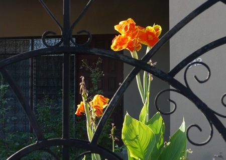 Merida Mexico city view garden flowers 版權商用圖片