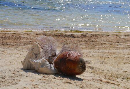 Muschel Zeit am Strand Sommerurlaub Standard-Bild