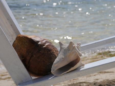 Muschel Zeit am Strand Sommerurlaub