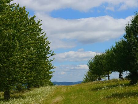 green nature: green nature fields and trees background Stock Photo