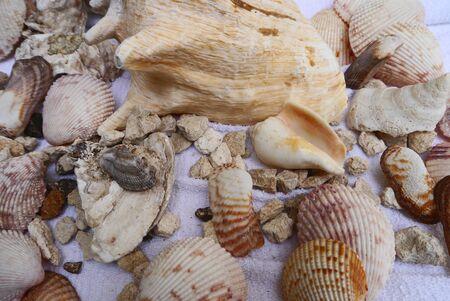 Zeit am Strand Muschel