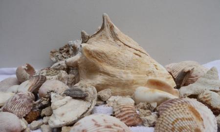 Zeit am Strand Muschel Standard-Bild