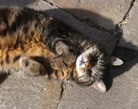 sweet home: mascotas peludas dulce amistad gatos caseros