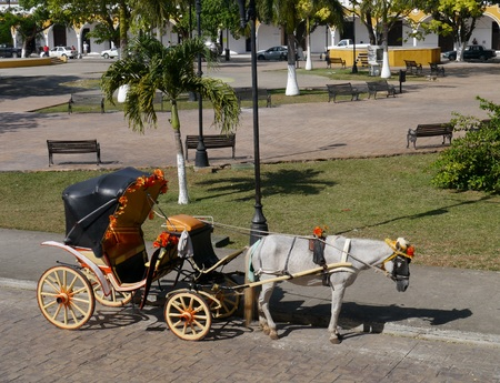 whitehorse: Izamal Yucatan Mexico town yellow horse buckboard wagon sunflowers Stock Photo
