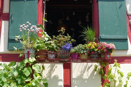green been: flowers garden design spring summertime Stock Photo