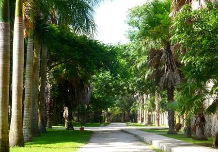 merida: Mexico Merida Hacienda Finca Rancho Chichi Suarez Colonial