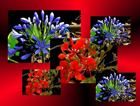 flowerpower: flower summer greetings postcard in love friendship and flower Wishing Stock Photo