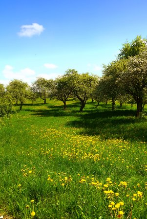 and germany: spring landscape germany fields flowers summer sun