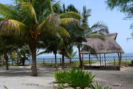 bravo: beach garden Holiday summer Mexico Palms beach house