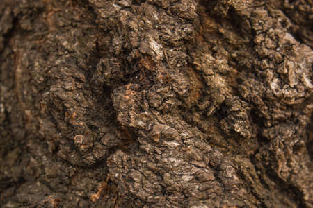 wood surface: broun wood rich surface texture the macro