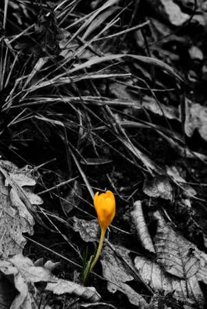 hojas secas: Flor en las hojas secas