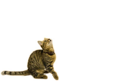 Cute cat looking up above on white isolated background. Can be used as template