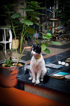 Cute looking tuxedo cat close up view