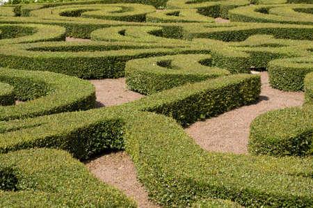 Shrub Maze Zdjęcie Seryjne