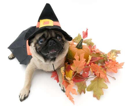 Heksen dwerg spanner gekleed omhoog voor Halloween