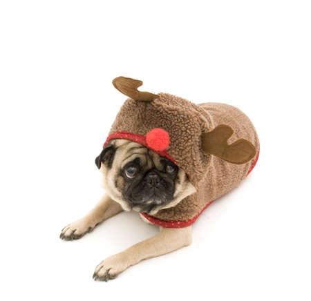 Reindeer Pug Laying Down