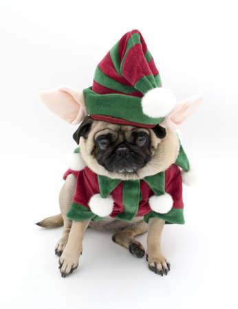 Embarrassed Elf Pug