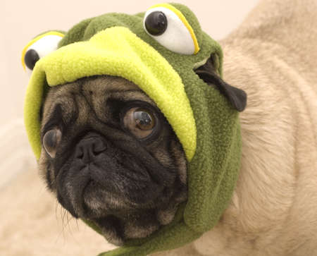 Frog Pug