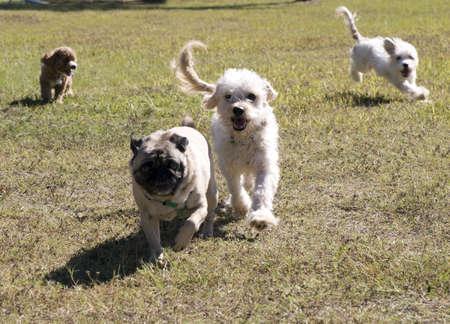 Perros en el Parque Foto de archivo - 8252732