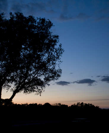 Silhouette of Tree in Everglades photo