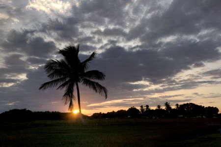 Silhouette of Palm Tree photo