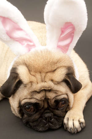 Dog with bunny ears photo