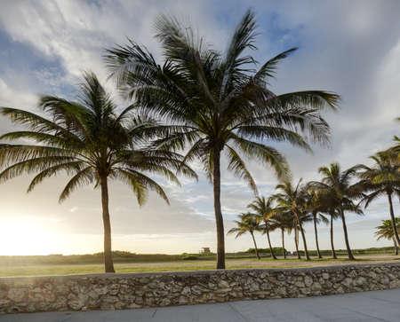 Palm trees in Miami Beach Stock Photo - 14601792