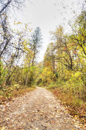 HDR of Trail in North Carolina Stock Photo - 15983766