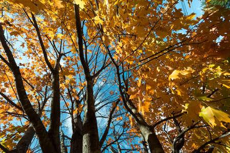 Orange Trees Stock Photo - 15983726