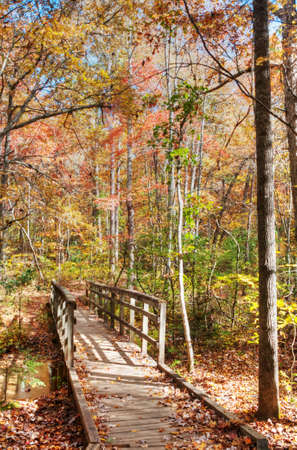 Trail in North Carolina Stock Photo - 16297110