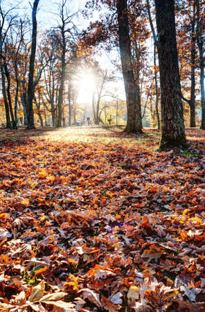 Fall in North Carolina Stock Photo - 16297102