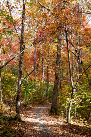Fall Trail in North Carolina Stock Photo - 16693925