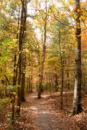 Fall Trail in North Carolina Stock Photo - 16693920